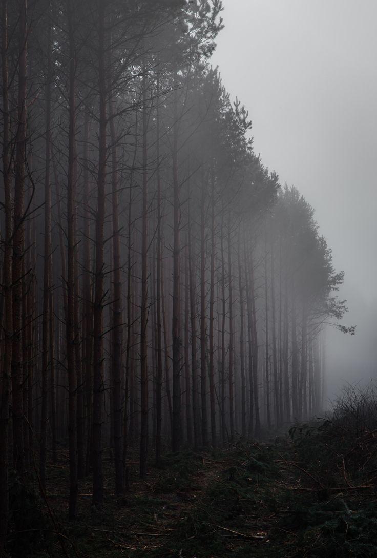 National Park clipart dark forest #12