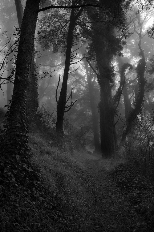 Dark Wood clipart haunted forest Forest best ° and Find