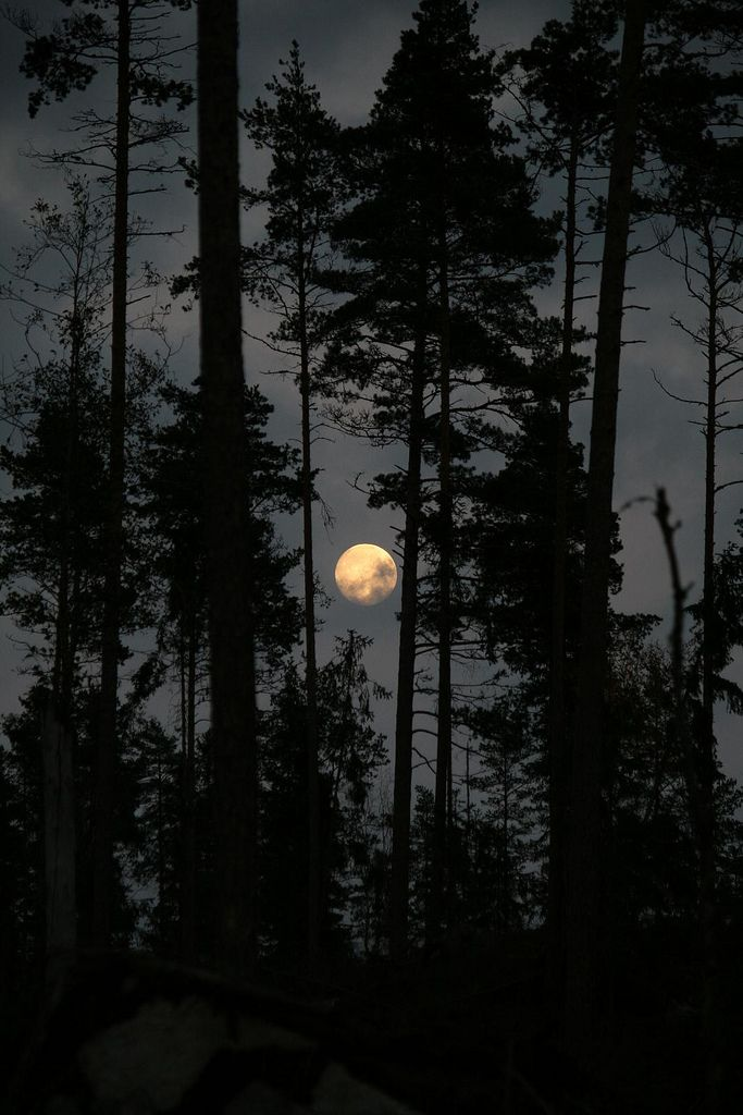 Dark Wood clipart 807 Gabriels stars images Edeback