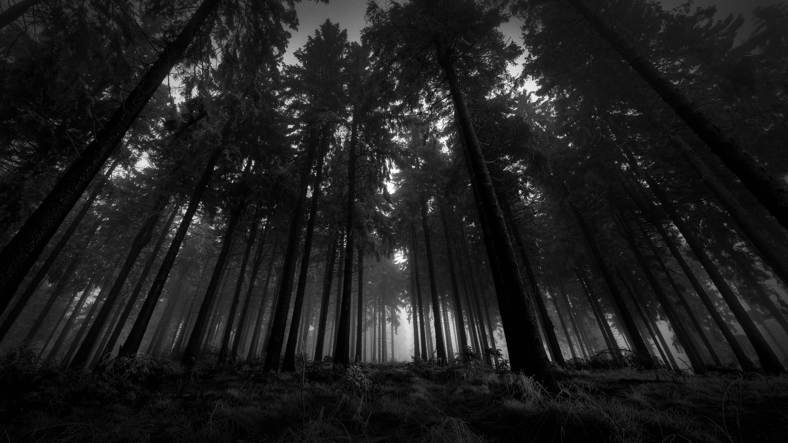 Fog clipart background tumblr Forest Backgrounds Desktop Forest Dark