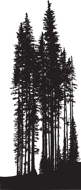 Drawn pine tree vector 25+ more ideas Find and