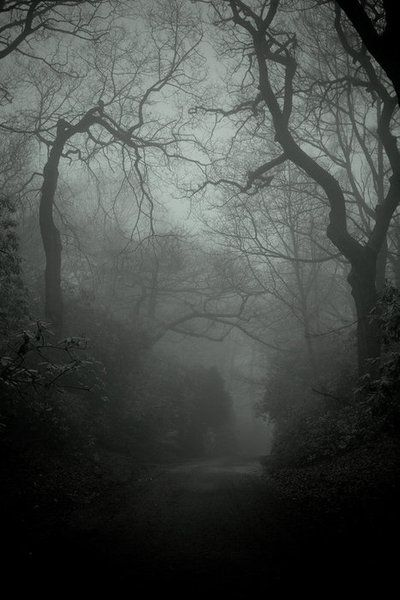 Dark Wood clipart spooky forest I scenery ForestMisty pictures Pinterest