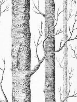 Dark Wood clipart wallpaper Best  and Pinterest and
