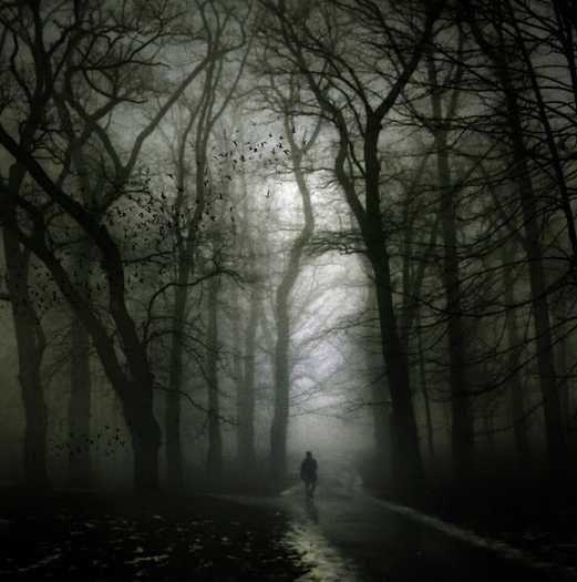 Dark Wood clipart winter forest Photo Dark Pinterest dark shoot
