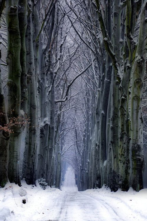 Dark Wood clipart winter forest Best ForestThe images The the