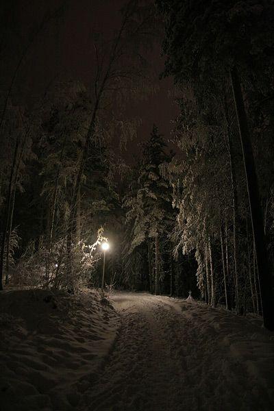 Dark Wood clipart winter forest  on 25+ ideas Dark