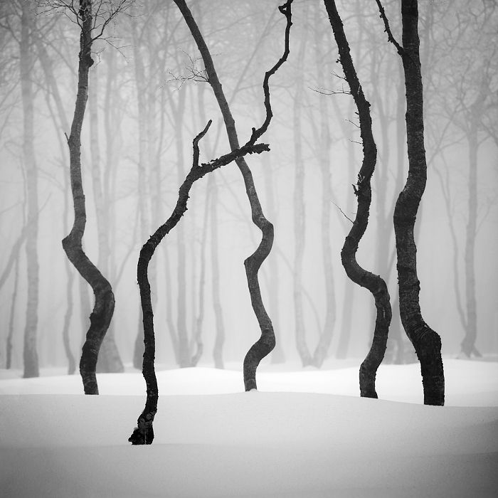 Dark Wood clipart winter forest Images 227 Find about Winter
