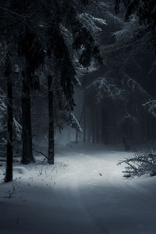 Dark Wood clipart winter forest Sleeping on 149 images best