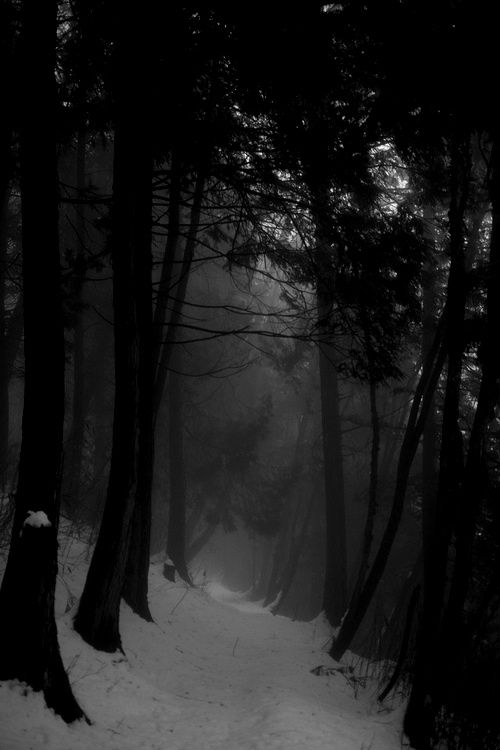 Dark Wood clipart winter forest Night and Foggy Find 1607
