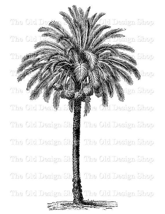 Drawn palm tree printable #15