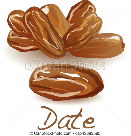 Dried Fruit clipart date fruit Date Vector Date fruit illustration