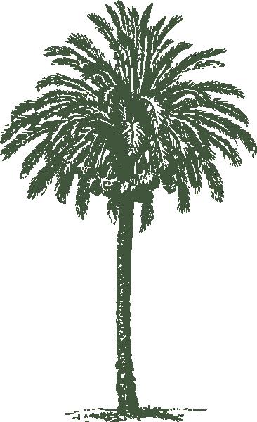 Date clipart khajur Date Tree (32+) clip tree
