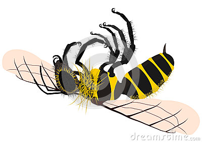 Hornet clipart wasp Com Bees Sting is home