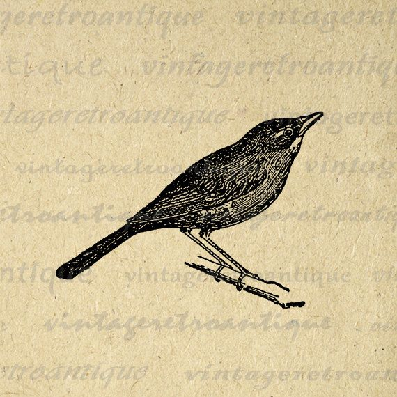 Brds clipart nightingale Nightingale Nightingale Download images on