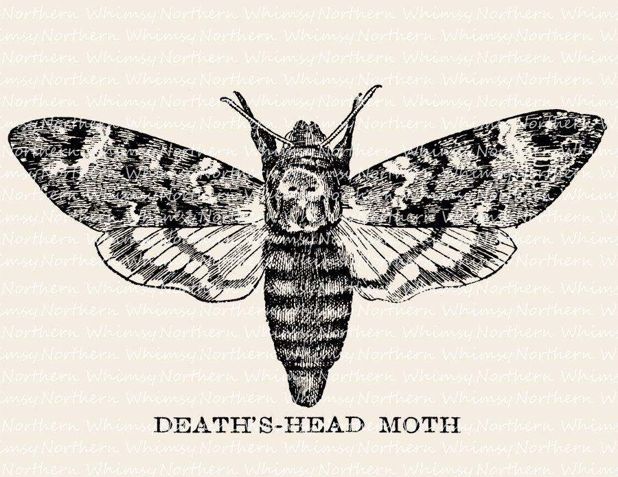 Deaths Head Moth clipart Etsy Illustration Art Moth Stamp