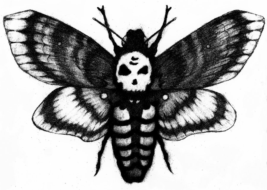 Deaths Head Moth clipart Moth Head hawk drawing Drawing