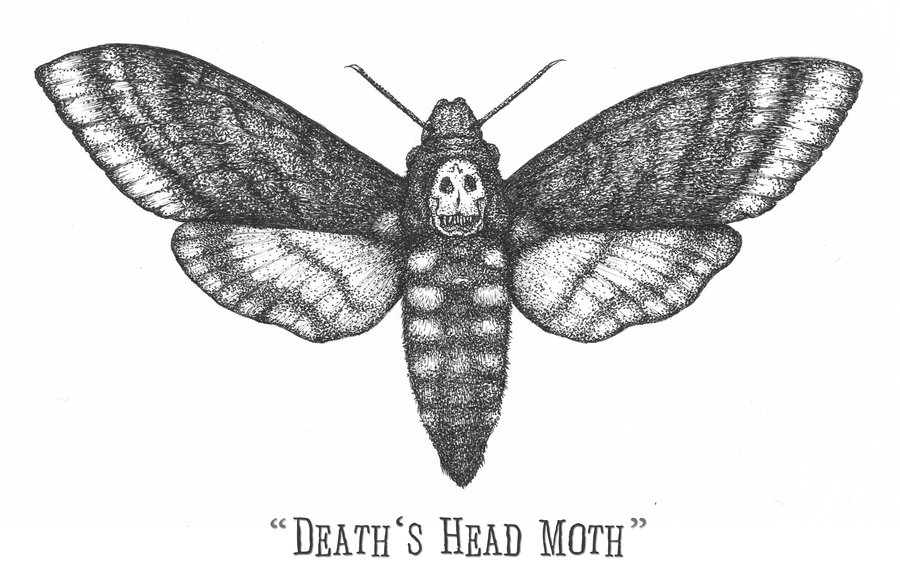 Moth clipart drawn Drawing Deaths Deaths Moth Drawing