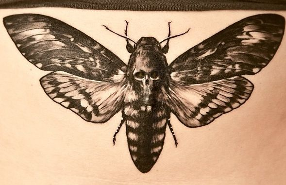 Drawn skull vector Ideas Tattoo moth Death Art