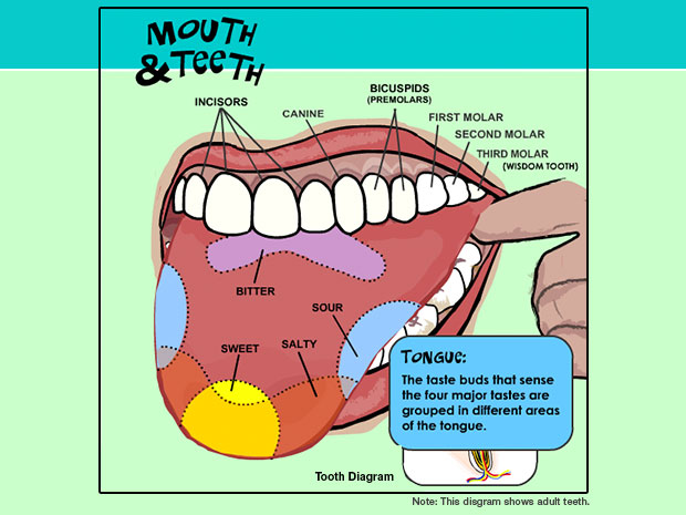 Decay clipart kid tooth How Child's Keeping Healthy Your
