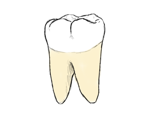 Drawn teeth unhealthy tooth Everything first Lower to wanted