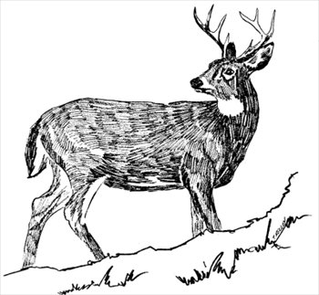 Dear clipart black and white Clipartcow free hunting images Art