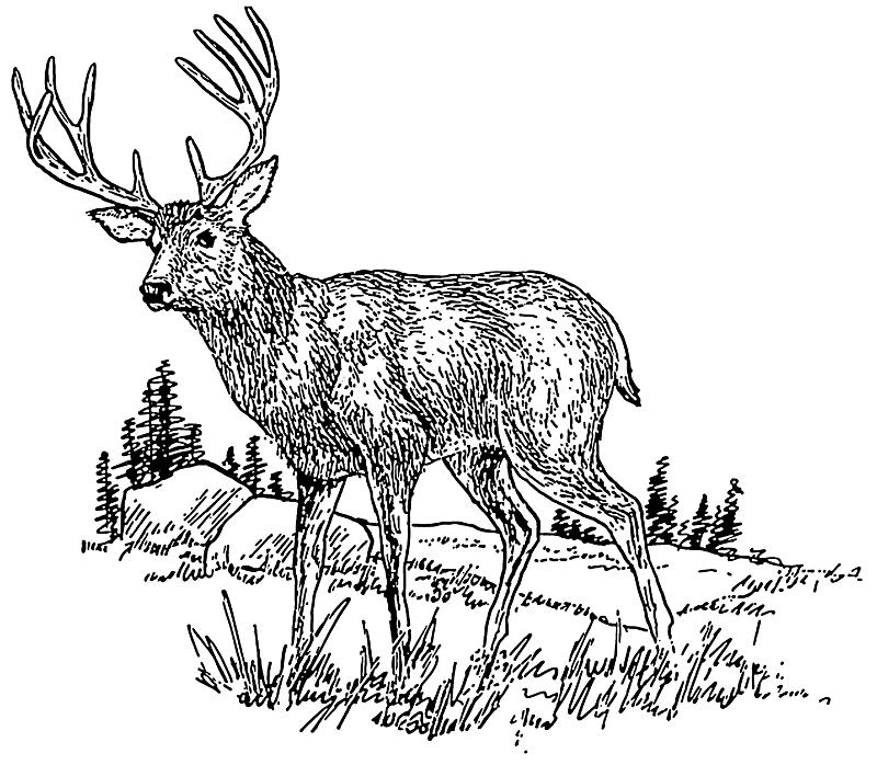Buck clipart dear In buck Deer field buck