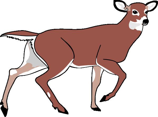Buck clipart female deer Art doe Free 68 Deer