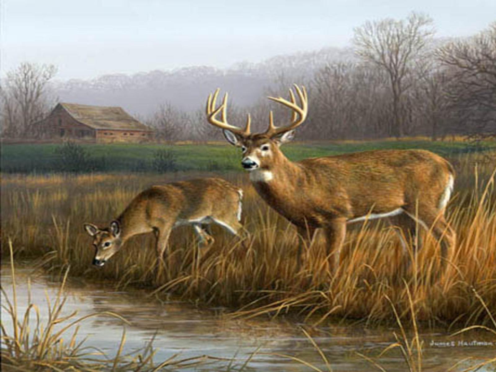 Hunting clipart whitetail deer #6