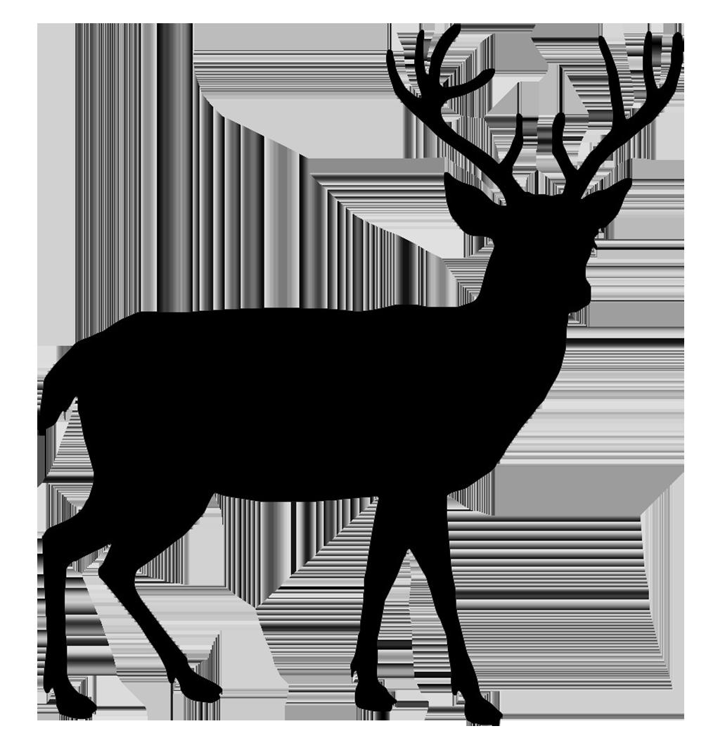 Buck clipart transparent Transparent All Images PNG Deer