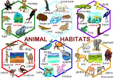 Destruction clipart habitat destruction Animals Habitats :  ESL