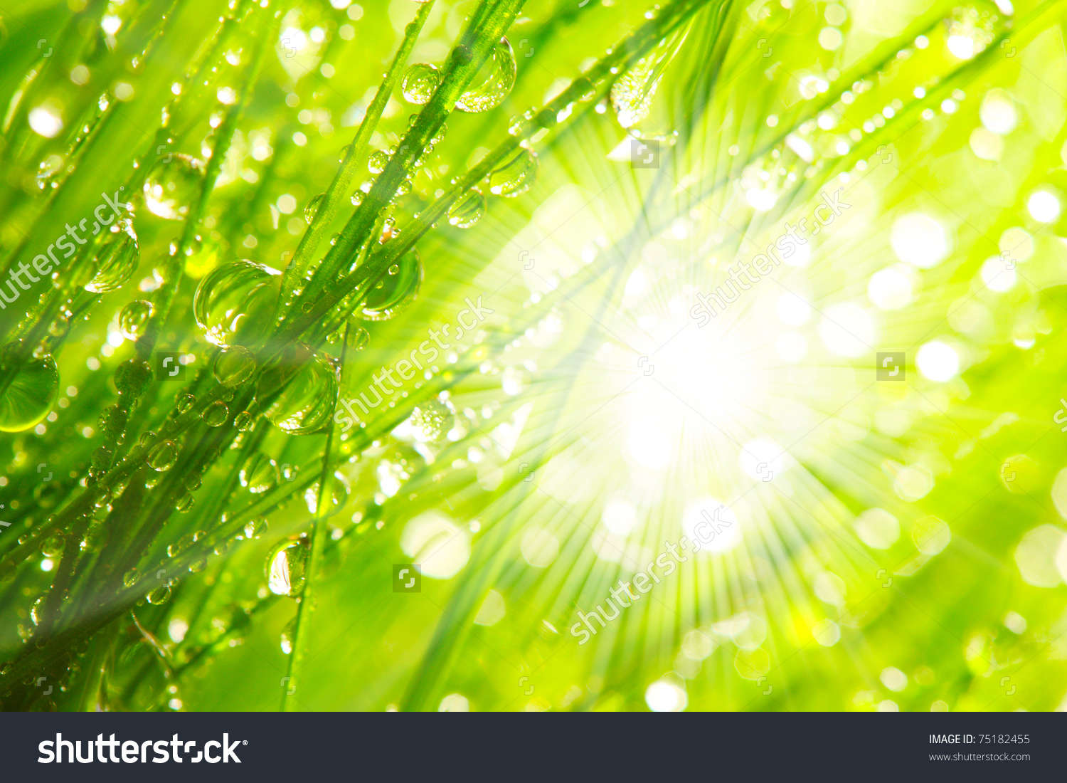 Nature clipart morning sunrise Download drawings Download Morning #14