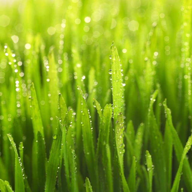 Green Gardening Canada on Grass