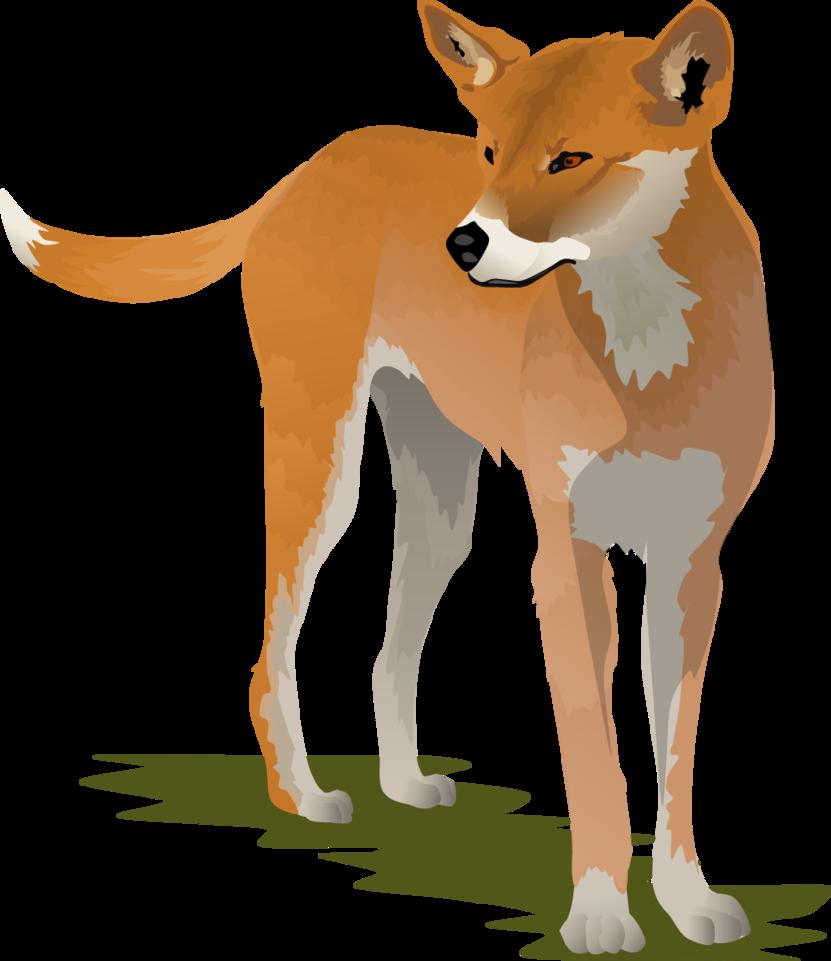 Dingo clipart Dannelboyz DeviantArt Dingo by Dannelboyz