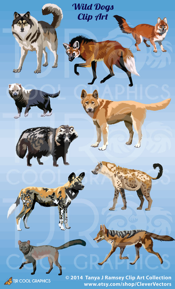Wolf clipart wild dog Wild PNG Wolf Dogs Spotted