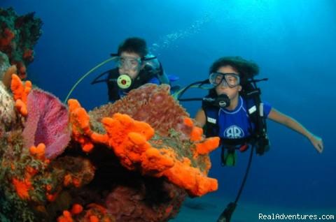 Diving clipart platform diving Klejonka Marine Marine biologyMarine Clipart