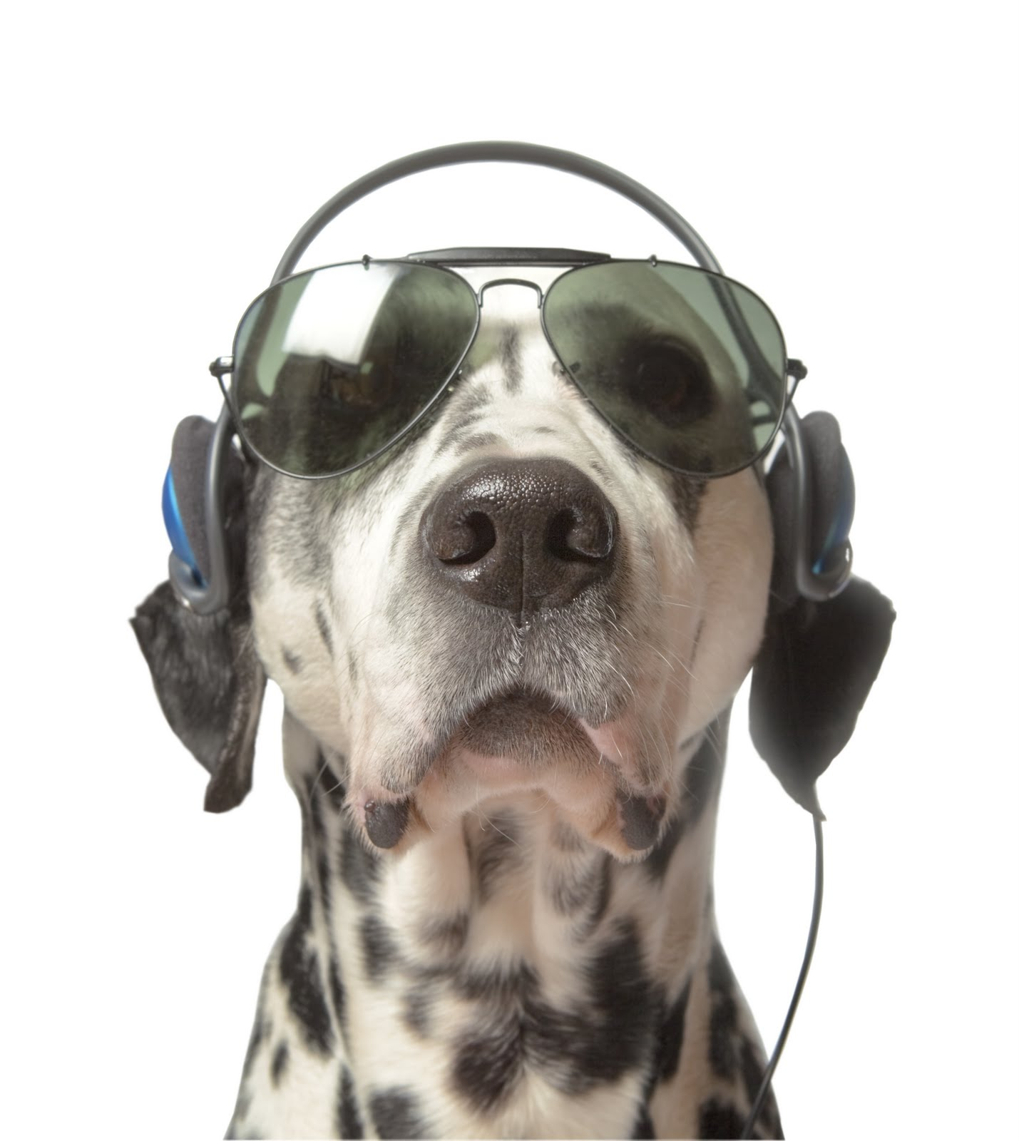 DJ clipart funny Wallpapers Pets: Dogs 2011 6