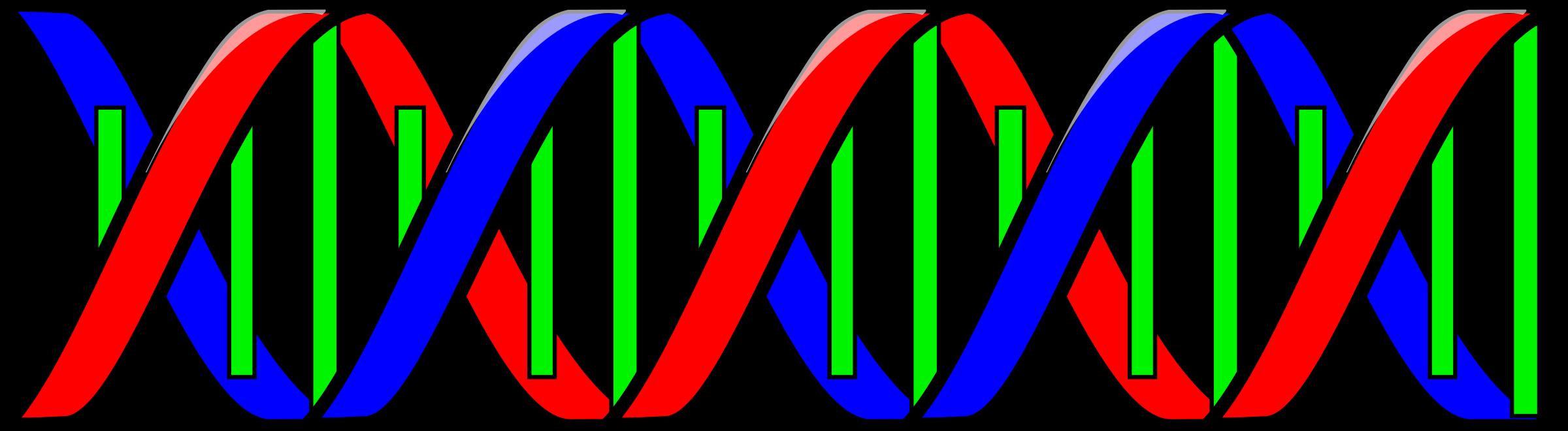 DNA Structure clipart Clipart art Clipart Clip DNA