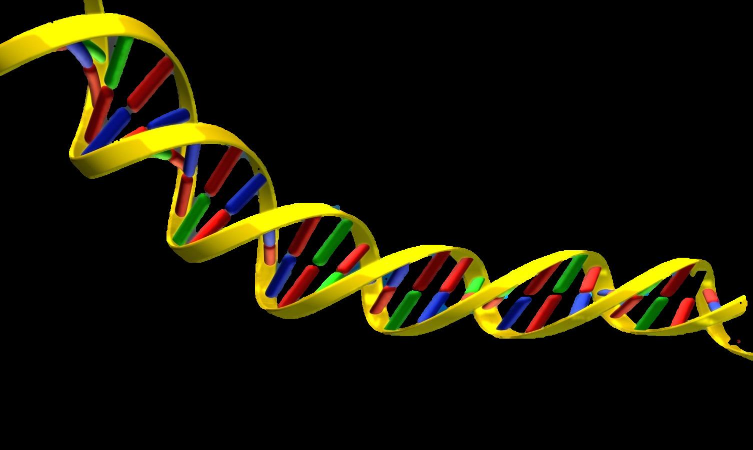 DNA Structure clipart Clipart art Dna Clip DNA
