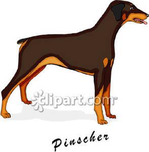 Doberman Pinscher clipart Breeds Royalty Picture Pinscher Free