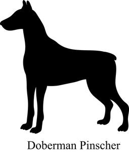 Doberman Pinscher clipart Pinscher Doberman breed Clipart Doberman
