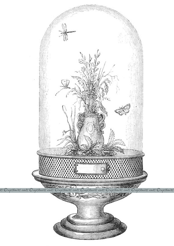 Dome clipart glass With Butterflies Vivarium UpstairsCats on