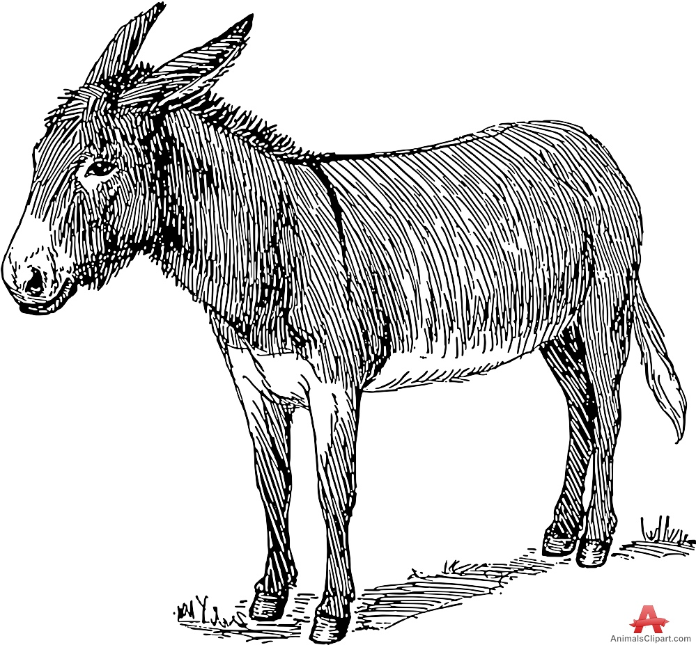 Skeleton clipart donkey Animal Donkeys Downloads Clipart Animals