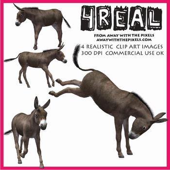 Realistic clipart donkey #2