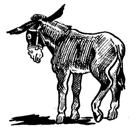Sad clipart donkey #10