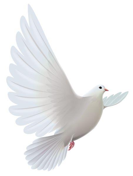 Peace Dove clipart sacrament #11