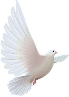 Pigeon clipart air animal на Фото [átalakított] (4) Яндекс