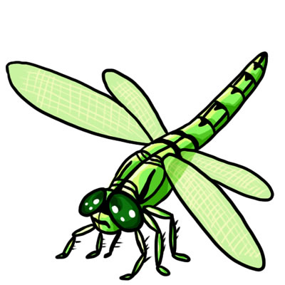 Dragonfly clipart And Art Dragonfly Colorful 18