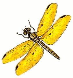Yellow clipart dragonfly Cliparts collection art dragonfly 3