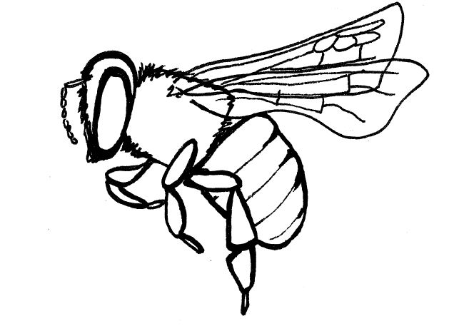 Drawn insect name Honey Download Art Bee Art