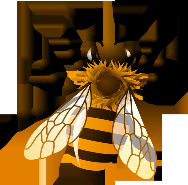 Drawing clipart bee  com Art Community Bee
